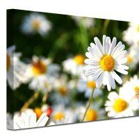Cvetni motivi