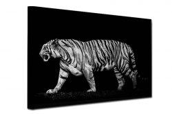 tigar-crnobeli
